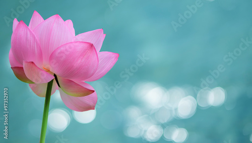 Deurstickers Lotusbloem Water lily flower panoramic image
