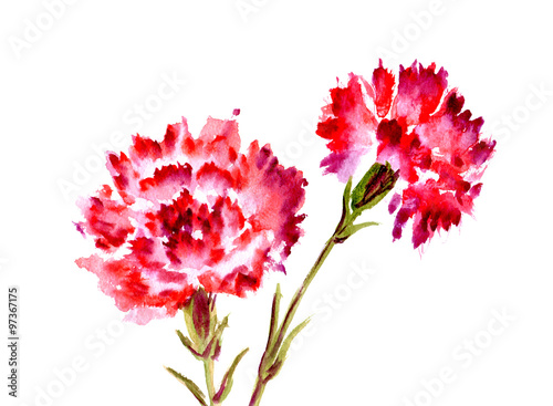 Photo  Watercolor red flower carnation