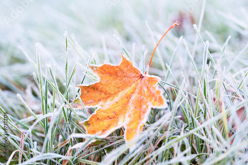 Fotografija Frost on the leaf and grass.