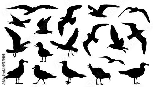 Photo seagull silhouettes