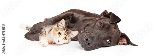 Pit Bull Dog and Kitten Cuddling Canvas-taulu
