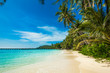 tropical beach. sea and coconut palm. Landscape of paradise tr