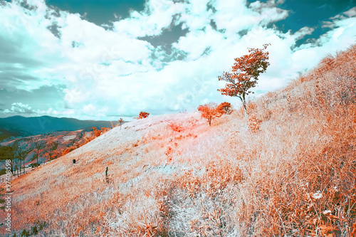 Foto  Beautiful infrared landscape forest image