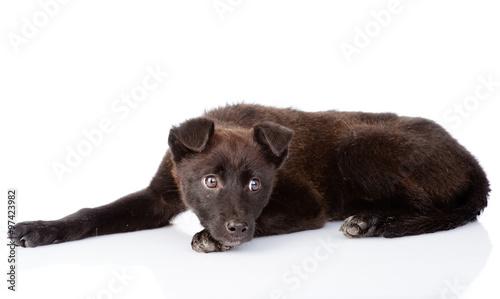 Foto  sad black crossbreed dog lying. isolated on white background