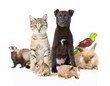 large group of pets. Isolated on white background
