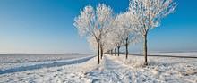Snowy Trees Along A Field In Winter
