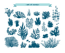 Underwater Set Of Corals And A...