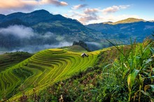 Sunrise Over Terraced Rice Paddy In Mu Cang Chai District Of Yen Bai Province, Highland