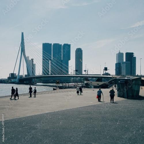 Foto auf Acrylglas Schwan Rotterdam