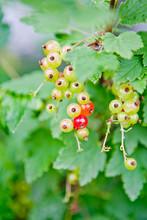 Red Beads. Juicy Summer Berrie...