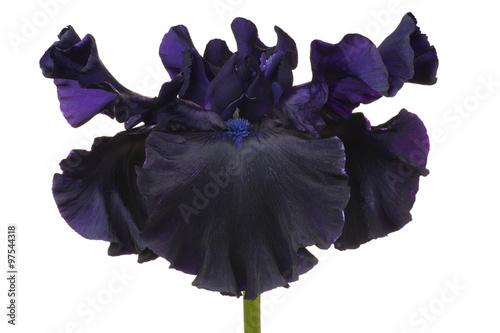 Printed kitchen splashbacks Iris iris