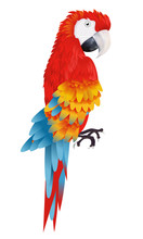 A Bright Macaw Parrot Isolated...