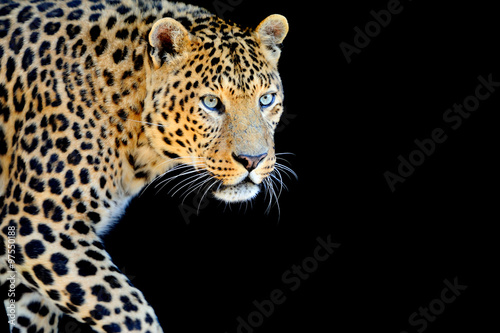 Poster Leopard Leopard portrait on dark background
