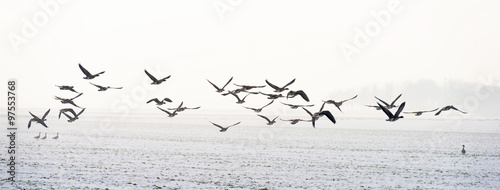 Photo Stands Bird Birds flying over a snowy field in winter