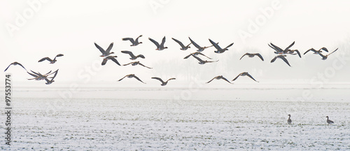 Foto op Canvas Vogel Birds flying over a snowy field in winter