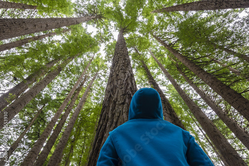 Fotobehang Bossen Man looking up in a forest