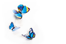 Blue Butterfly On A White Back...