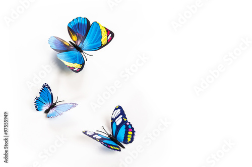 Foto op Aluminium Vlinder blue butterfly on a white background