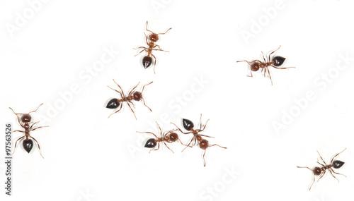 Plakat mrówki na białej ścianie