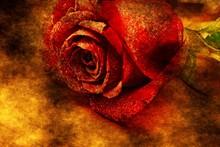 Red Rose Grunge Concept