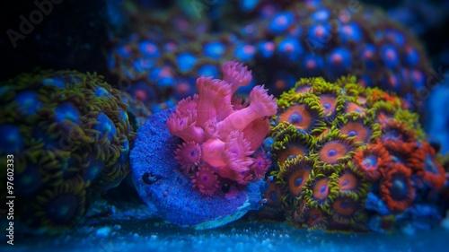 Poster Sous-marin Corals in marine aquarium