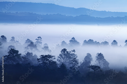 Aluminium Prints Blue sky Fog in forest at Khao-kho Phetchabun,Thailand
