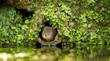 A little cute water vole