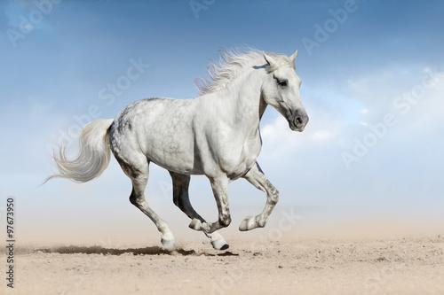 fototapeta na lodówkę Horse run gallop