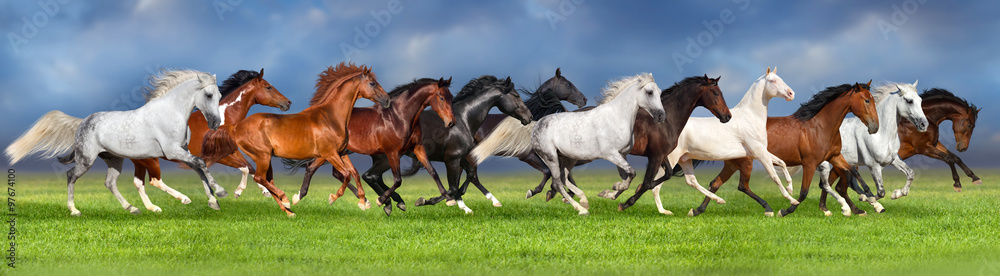 Fototapety, obrazy:  Herd of horses on summer pasture, banner for website