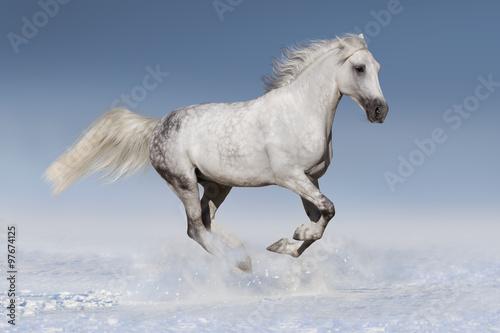 Photo  Horse in snow