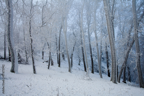 Aluminium Prints Landscapes Frosty cold winter forest