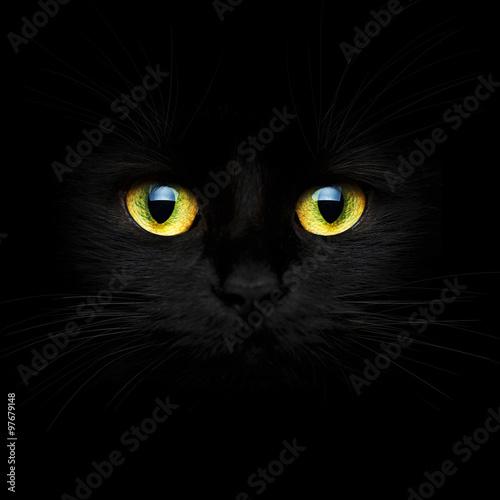 Fotografía Hocico lindo de un gato negro