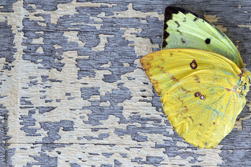 Fotobehang Vlinders in Grunge colorful butterfly wing on grunge colorful wooden panel