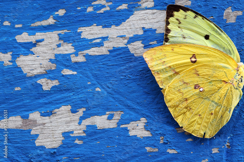 Photo sur Toile Papillons dans Grunge butterfly wing on grunge colorful wooden panel