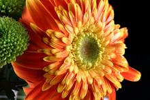 Mix Of Chrysanthemum Flower Orange White Green On Black Background