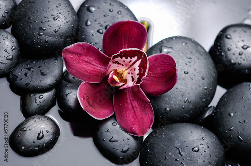 Obrazy one color   orchid-with-therapy-stones