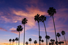 Palm Trees In Sunset At Corona Del Mar Beach, California.