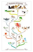 Biological Evolution Animals Scheme