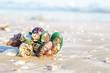 Shells or Conch on sea beach.