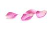 canvas print picture - Pétales de rose