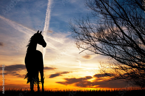 Photo  horse silhouette at sunset