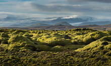 Grindavik Lava Field At Iceland That Cover By Green Moss Snow Mountain Background In Autumn Season
