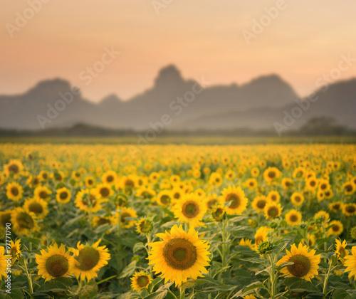 Foto auf Gartenposter Landschappen Sunflower field