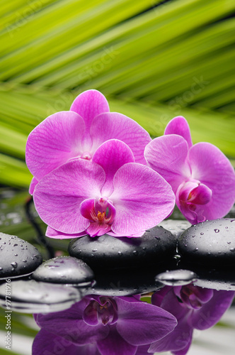 Papiers peints Spa Pink orchid with palm and stones on wet background