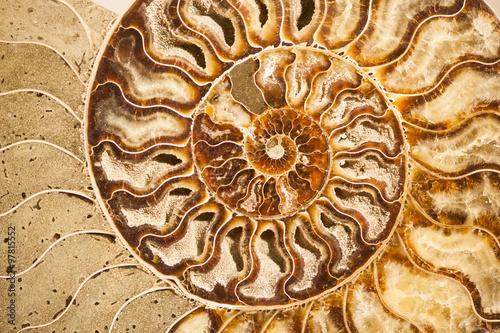 Detail of ammonite fossil shell Wallpaper Mural