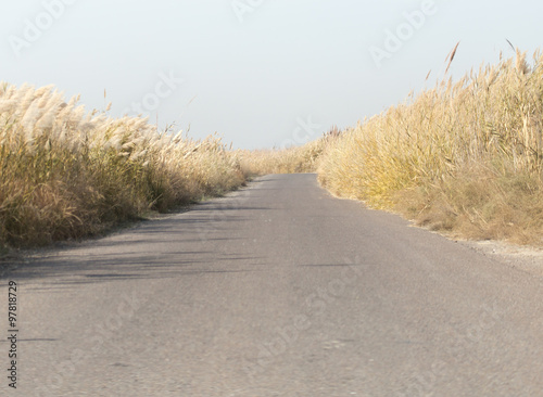 Photo  asphalt road in the reeds