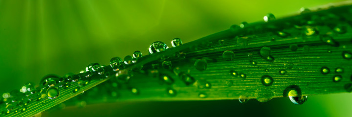 FototapetaWater droplets on grass