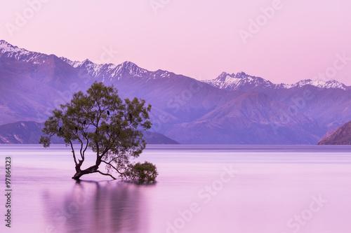 drzewo-wanaka-z-nowej-zelandii-wyrastajace-z-wody