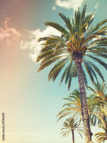 Canvas Prints Palm tree Palm trees over cloudy sky background, old style