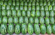 Group Of Fresh Watermelons